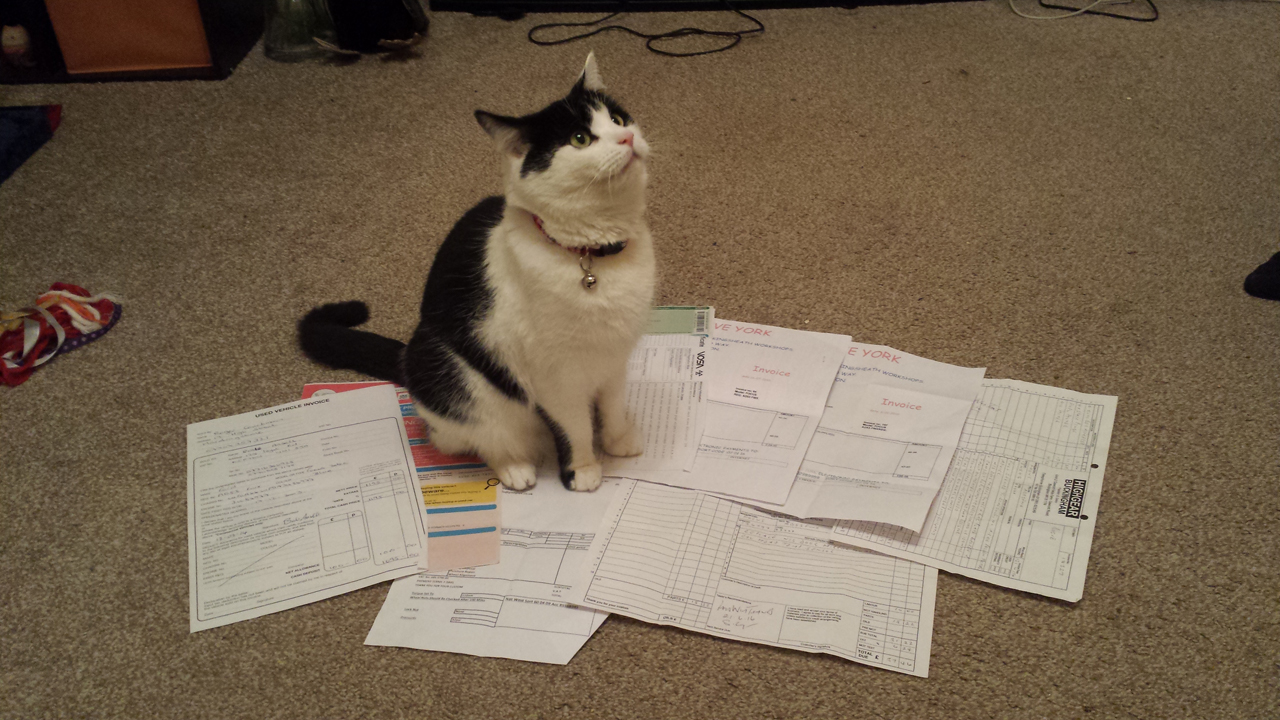 Cat Approved Paperwork.jpg