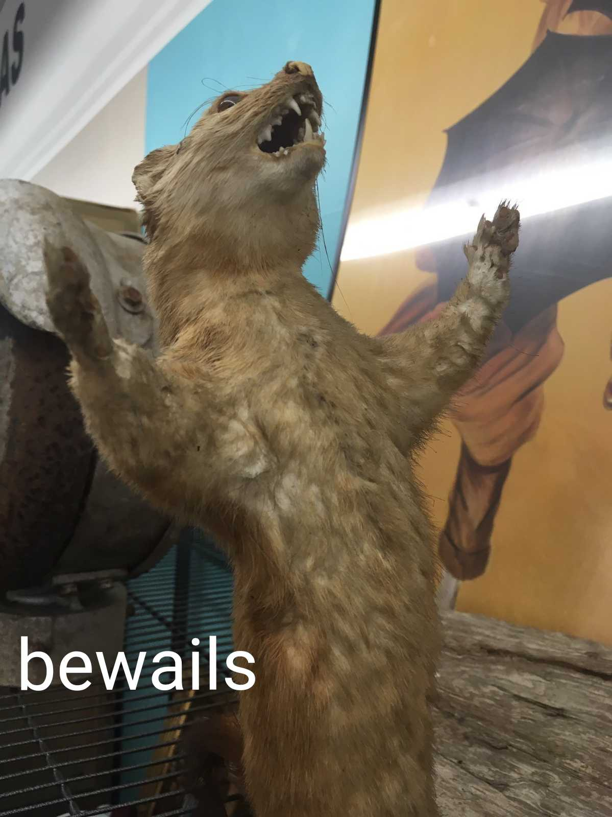 Bewails.jpg