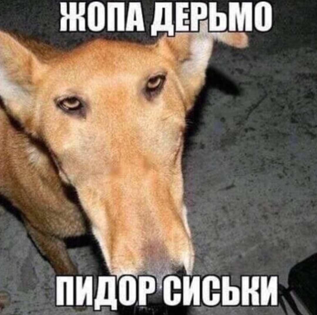 russian dog.jpg