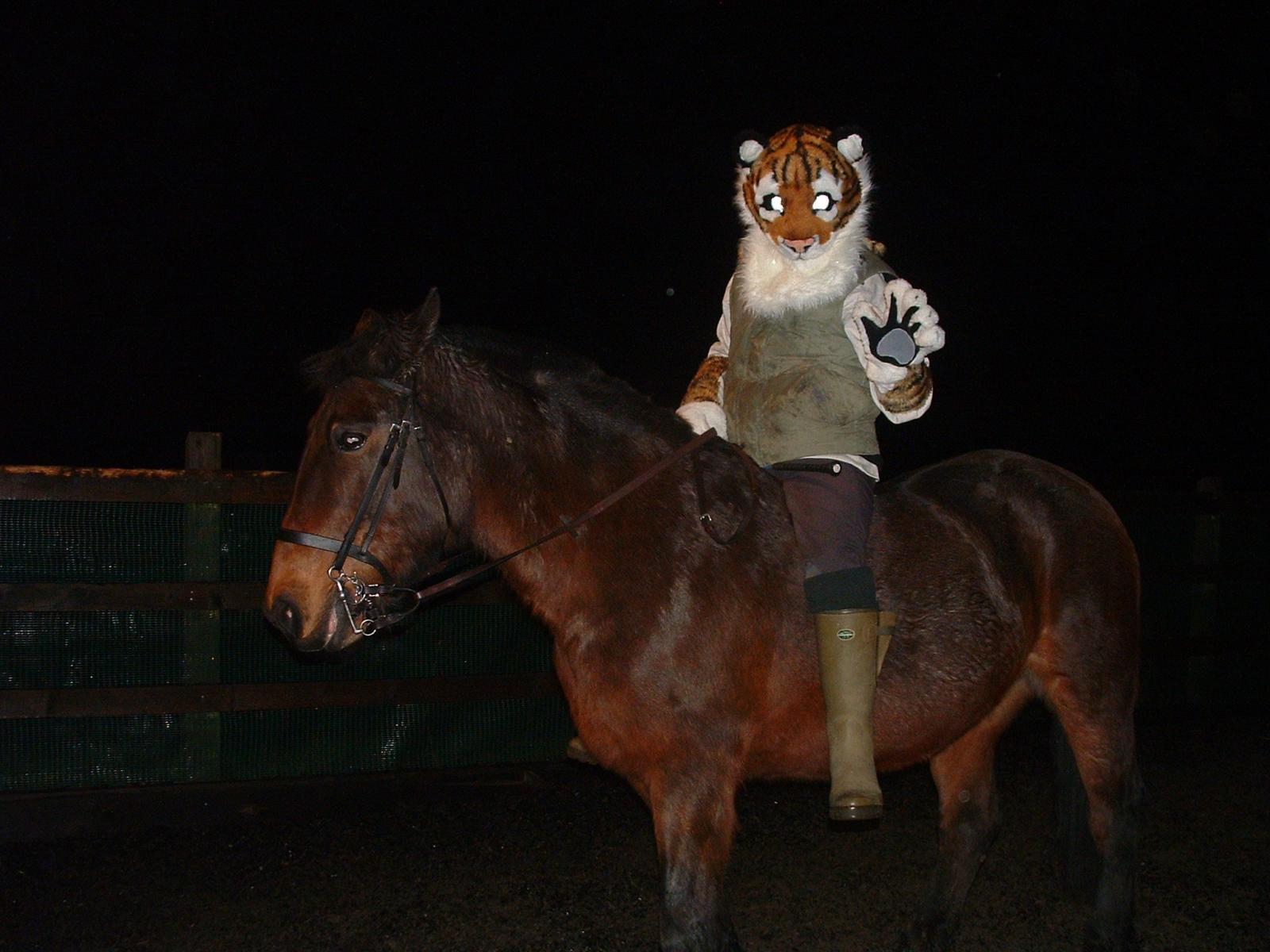 ride_tiger.jpg