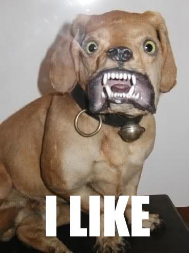 Bad-Taxidermy-Dog.jpg