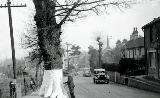 tmp_whitewashing-the-tree-trunks-on-the-roadside-10990616-2011587834.jpg