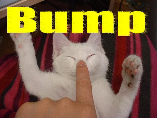 Bump_kitty.jpg