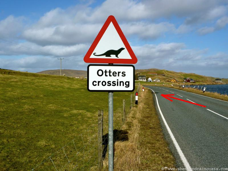 otters-crossing-h600a.JPG