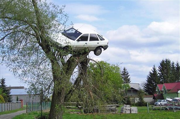 Car_in_tree.jpg