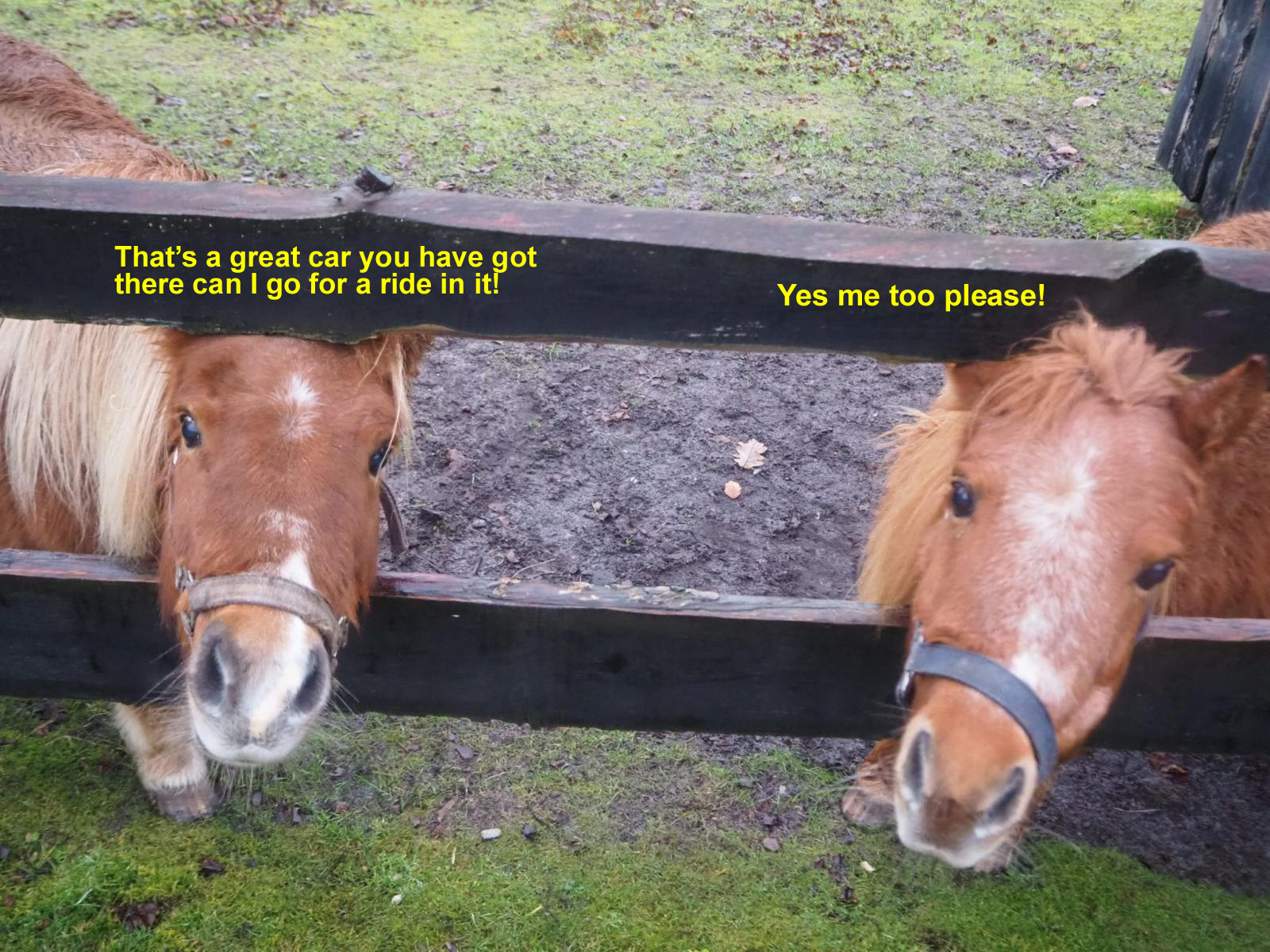 Horses miniture with words.jpg