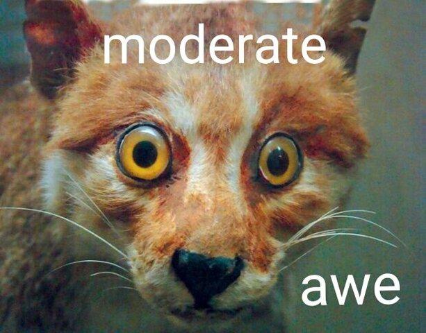 moderate-awe.thumb.jpg.7afdad6172b7e6eda3f3b879b9bbb0a2.jpg