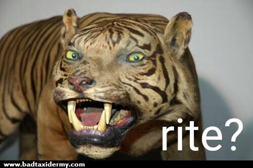 Rite.jpg.2d32104147b26cc177d6229007c9129b.jpg